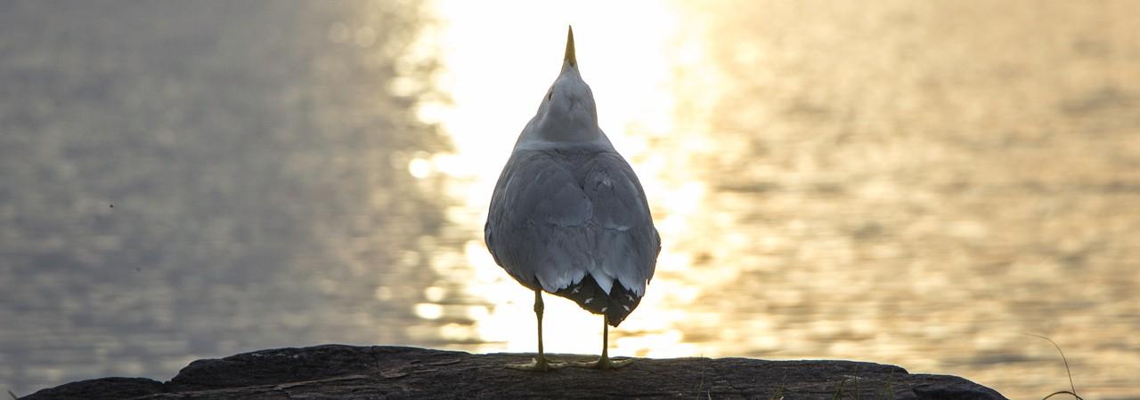 Bird on Forest Lake in Vermont