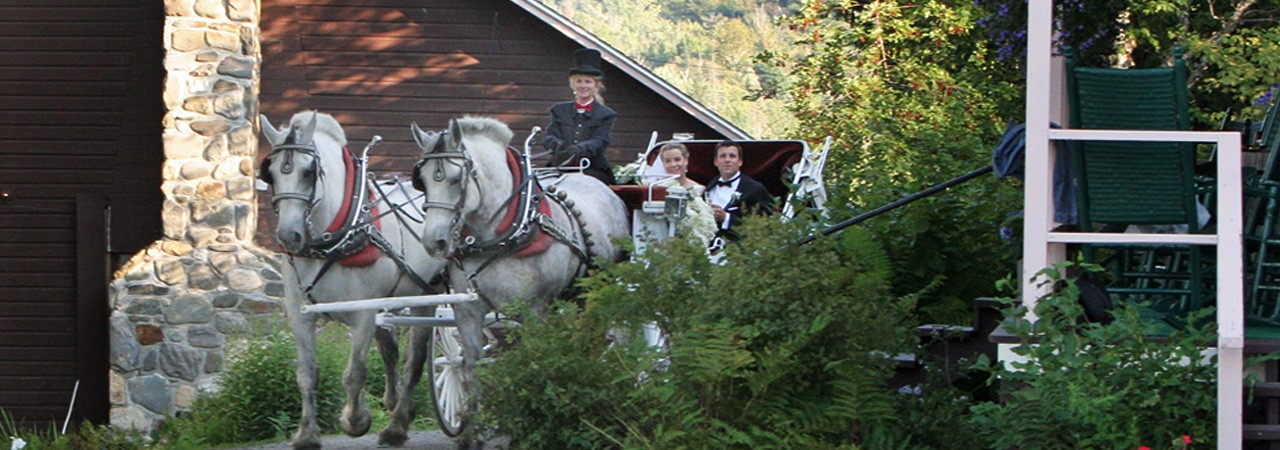 Wedding-horses Vermont weddings